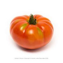 Pomodoro Pantano 1kg