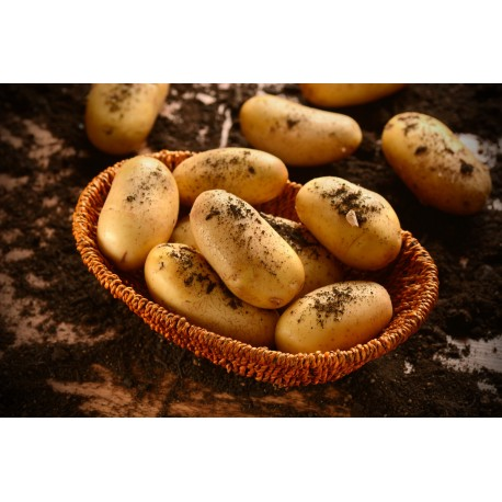 Patate Ambra (1 Kg)
