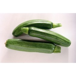 Zucchine scure 1 KG