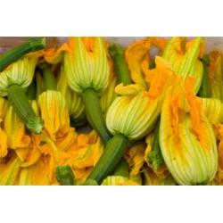 Zucchine Romanesche 1 Kg