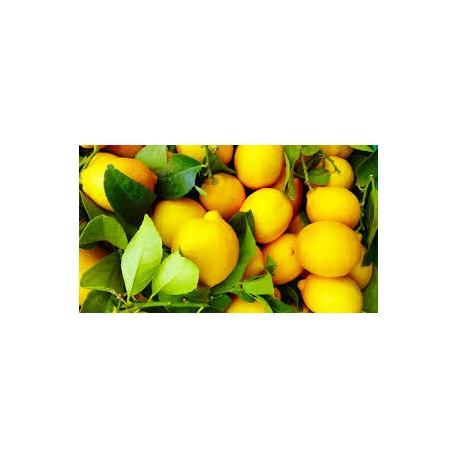Limoni succosi 1 kg